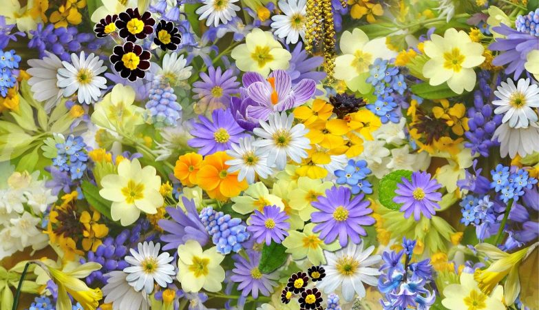 beautiful-spring-flowers-and-plants