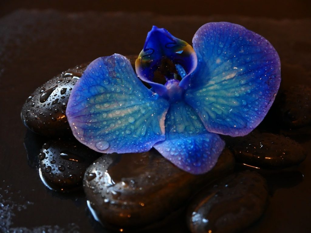 best time to water orchids