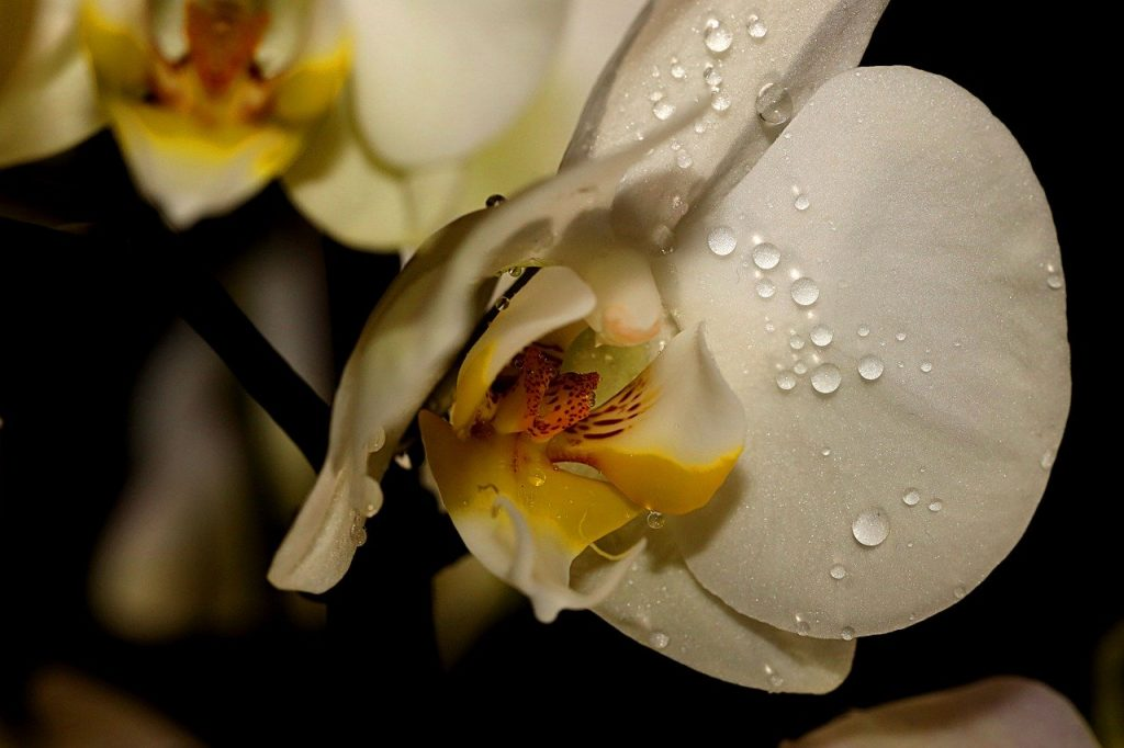 best ways to water orchids