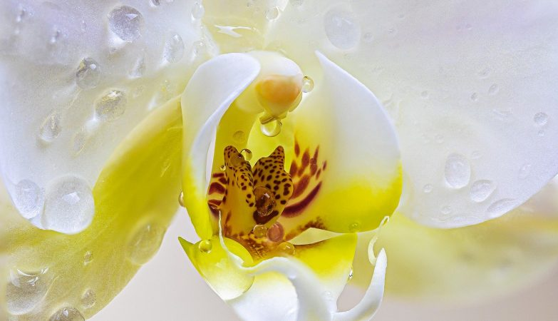 watering orchids beautiful